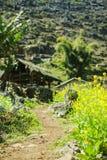 Canola fält fotografering för bildbyråer