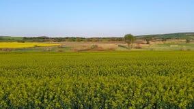 Canola fält Biobränslen Fotografering för Bildbyråer