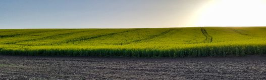 Canola fält Biobränslen panorama Arkivfoto