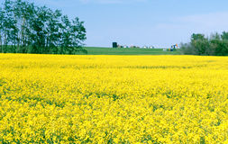 Canola Farm Field, Saskatchewan Canada Stock Photos