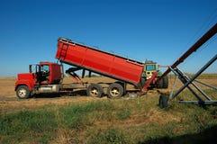 Canola Farm Harvest. A red grain truck dumps recently harvested canola (rape) grain into red auger Stock Photos