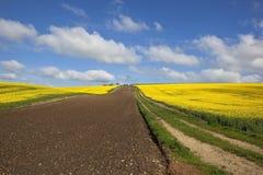 Canola farmland Stock Photo