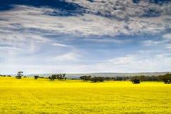 Canola Feld Stockfoto