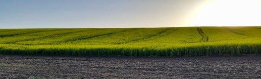 Canola Feld Biologische Brennstoffe Panorama Stockfoto