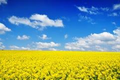 Canola Feld-Naturhintergrund Stockfotos