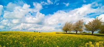 Canola Feld-Panorama Stockbilder