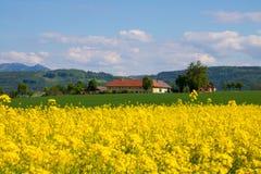 Canola-Feld, Sommer und blauer Himmel Stockbild