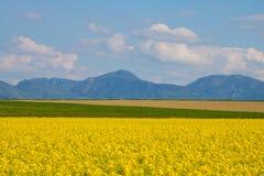 Canola-Feld, Sommer und blauer Himmel Lizenzfreie Stockbilder