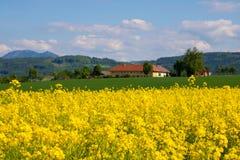 Canola-Feld, Sommer und blauer Himmel Stockfotos