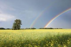 Canola Feld und blaue Himmel Stockfotografie