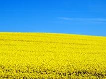 Canola Feld und blauer Himmel lizenzfreies stockfoto