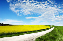 Free Canola Field Royalty Free Stock Image - 2335766