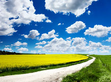 Canola Field. Path travels through a Canola Field Stock Photo
