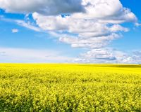 Canola Field. Photo of a canol field with blue sky and clouds Stock Photos