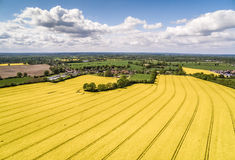 Canola Field Aerial View HDR Royalty Free Stock Image