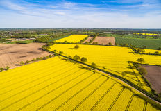 Canola Field Aerial View Stock Photo