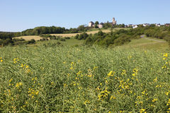 Canola field and ancient castle in background Royalty Free Stock Photo