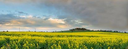 Canola field Australia. Stock Photos