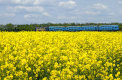 Canola field in a bright sunny spring day with a blue train passing in the background Stock Image
