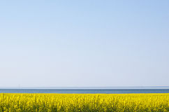 Canola field by the coast Stock Photos