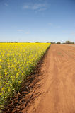Canola Field and Dirt Track Royalty Free Stock Photos