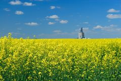 Canola Field and Elevator Royalty Free Stock Images