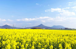 Canola field, Hungary Stock Photos
