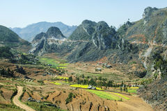 Canola field on mountain of ethnic minorities. Near Dong Van market, Ha Giang province, Vietnam. Ha Giang is one of the six poorest provinces of Vietnam. Ha Royalty Free Stock Images