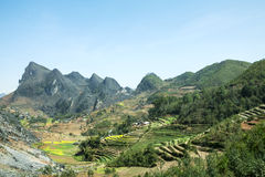 Canola field on mountain of ethnic minorities. Near Dong Van market, Ha Giang province, Vietnam. Ha Giang is one of the six poorest provinces of Vietnam. Ha Stock Photo