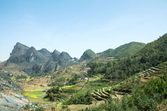 Canola field on mountain of ethnic minorities. Near Dong Van market, Ha Giang province, Vietnam. Ha Giang is one of the six poorest provinces of Vietnam. Ha Stock Photos