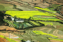 Canola field near house of ethnic minorities. Ha Giang province, Vietnam. Ha Giang is one of the six poorest provinces of Vietnam. Ha Giang is a famous tourist Royalty Free Stock Photo