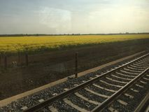 Canola field near the railways Royalty Free Stock Photo