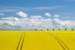 Canola Field and Romantic Sky Stock Image