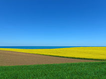Canola field and the sea Royalty Free Stock Photo