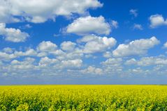 Canola Field Sky Stock Photo
