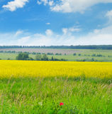 Canola field and  sky Stock Photography