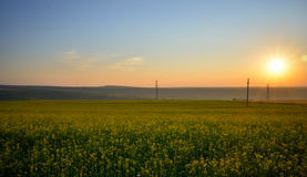 Canola field at sunrise Stock Image