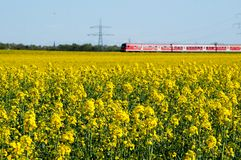 Canola field and train Stock Photography