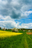 Canola Field Stock Photo