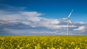Canola field and Wind Turbine Stock Images