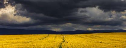 canola fields бурное Стоковое Изображение RF