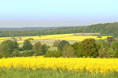 Canola Fields Royalty Free Stock Photos