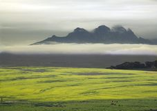 Canola Fields. With a view on a misty mountain Stock Photos