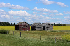 Canola fields in Alberta, Canada Royalty Free Stock Photos