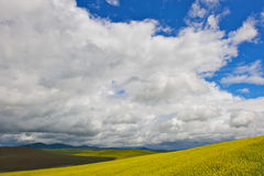 Canola fields with cloudscape stock photos