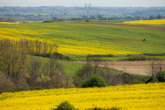 Canola Fields Lazio Italy Stock Image