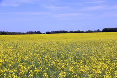 Canola fields Manitoba 2 Stock Photos