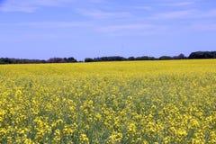 Canola fields Manitoba 2 Stock Photos