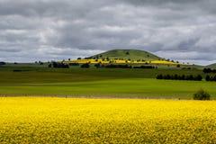 Canola Fields Near Smeaton Royalty Free Stock Images