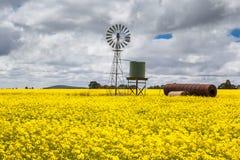 Canola Fields Near Smeaton Royalty Free Stock Photos